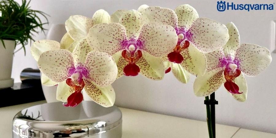 Decora tu casa con la orquídea, la planta de preciosas flores
