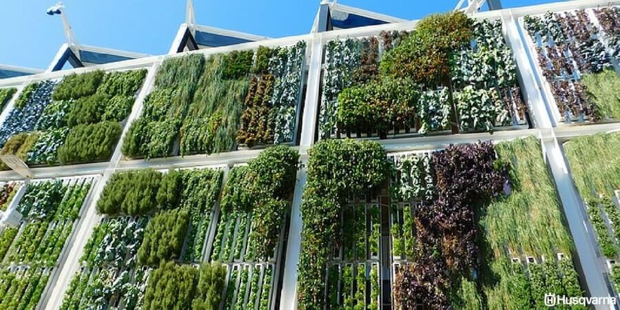 Jard n vertical una alternativa a la falta de espacio en for Riego de jardines verticales