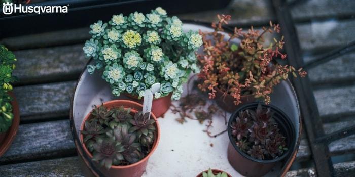 C mo plantar una planta la gu a de aspectos y pasos claves for Varias plantas en una maceta