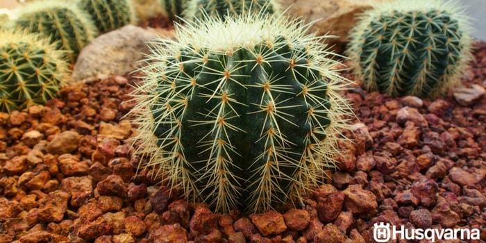 Todo sobre los cactus caracter sticas y variedades m s for Cactus variedades fotos