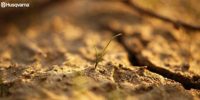 taxus-baccata-cultivo