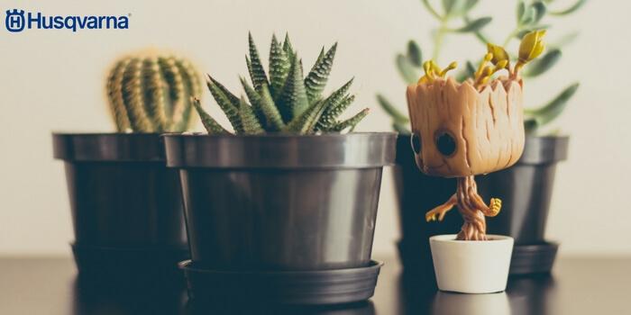 Todo sobre los cactus caracter sticas y variedades m s for Clases de cactus