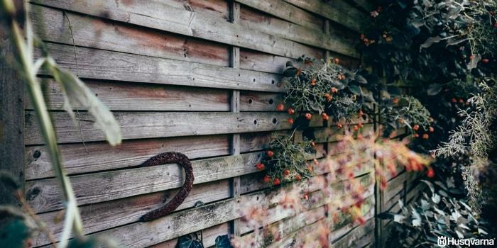 Plantas de sombra las especies perfectas para los for Plantas sombra exterior