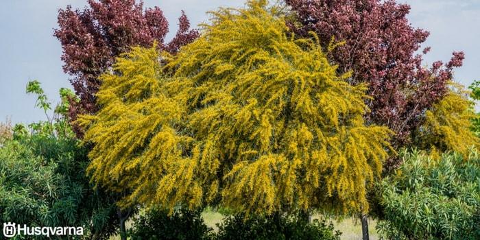 Todo lo que necesitas saber de los rboles de hoja perenne - Arbustos perennes con flor ...