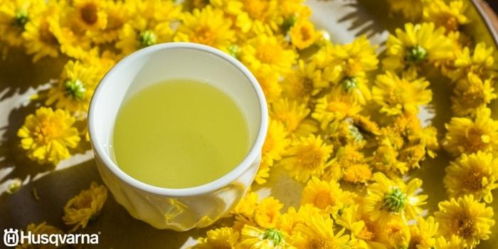 té-de-crisantemo