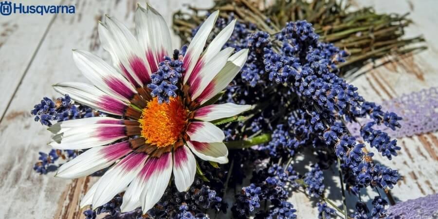 ¿Buscas una explosión de color en tu jardín? Planta gazanias