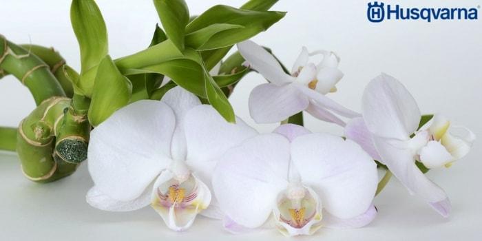 orquídeas-blancas