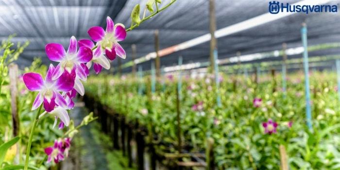 orquídeas-invernadero