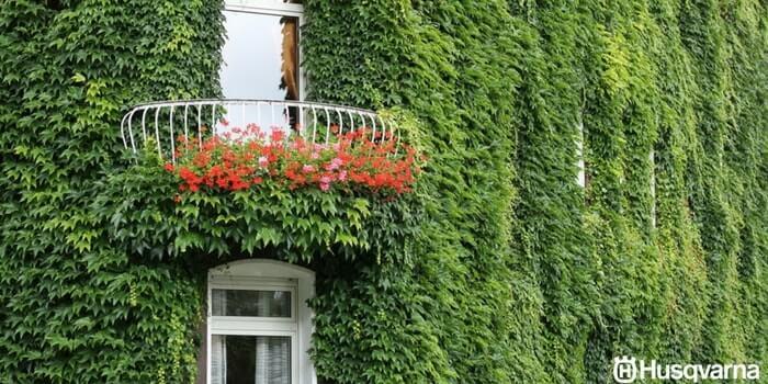 Decora tu jard n con las plantas trepadoras m s comunes y for Fachadas con plantas trepadoras