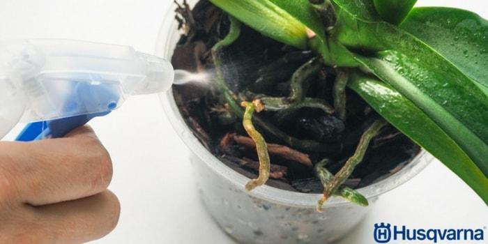vaporizar-orquídea