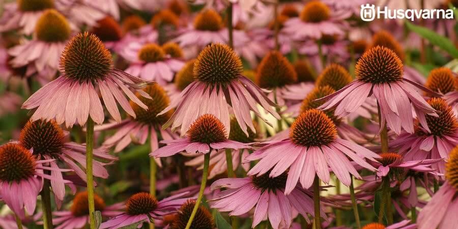 No sabes cómo decorar un jardín? Husqvarna te trae plantas con flores.