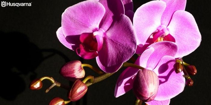 decora tu casa con la orquídea la planta de preciosas flores