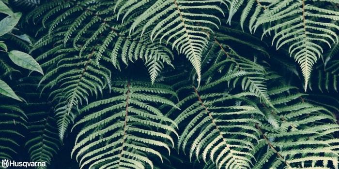 Plantas de sombra las especies perfectas para los for Arboles de hoja perenne con sus nombres