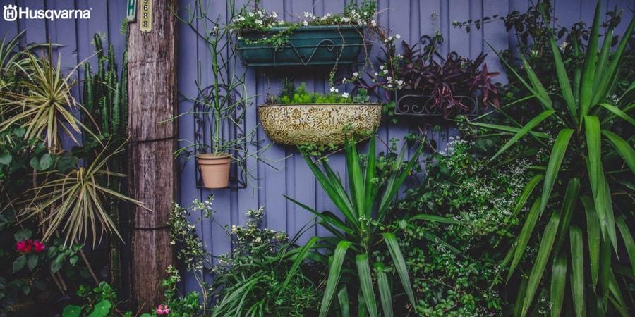 Plantas de sombra las especies perfectas para los for Jardines pequenos con plantas de sombra