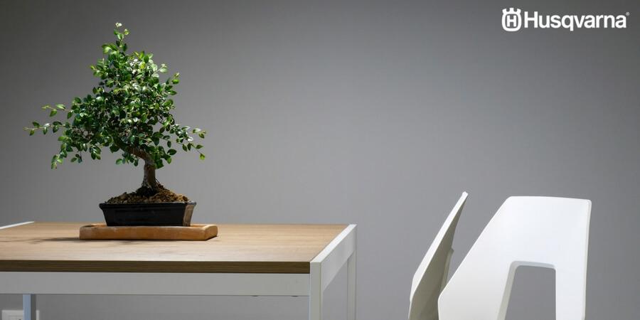 Cómo cuidar un bonsái, el pequeño árbol de maceta