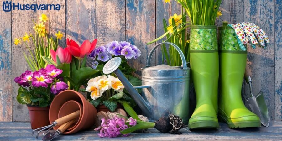 Cómo plantar una planta: Guía de aspectos claves