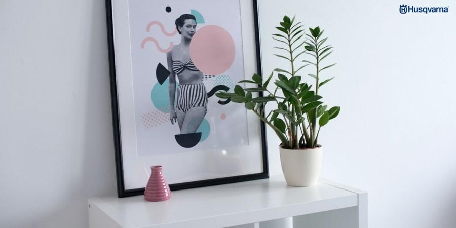 Zamioculca, la planta extremadamente resistente y poco exigente