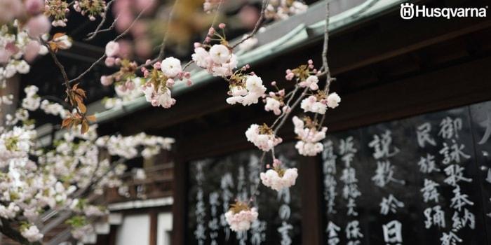 jardín-japonés-flores