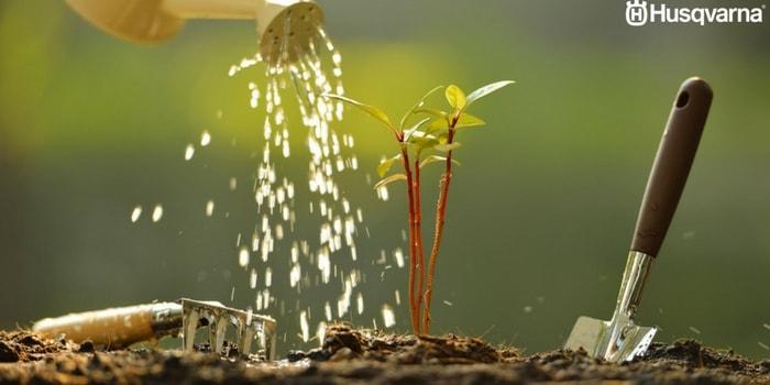 riego-de-planta