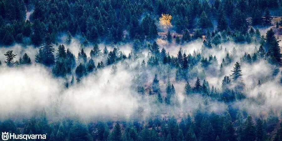 Todo Lo Que Necesitas Saber De Los árboles De Hoja Perenne