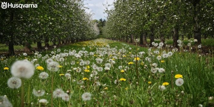 maleza-jardín
