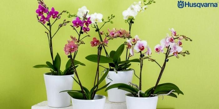 orquídeas-macetas