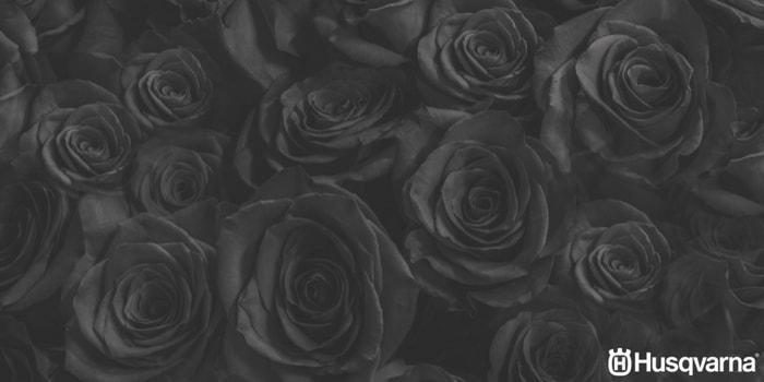 rosas-negras