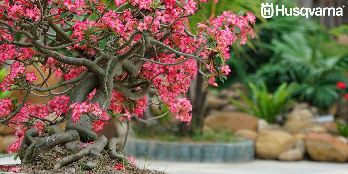 bonsai-flores