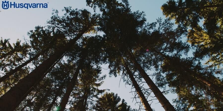 Poda de árboles: Los aspectos a tener en cuenta
