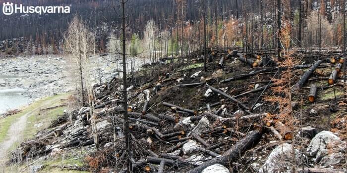bosque-incendio