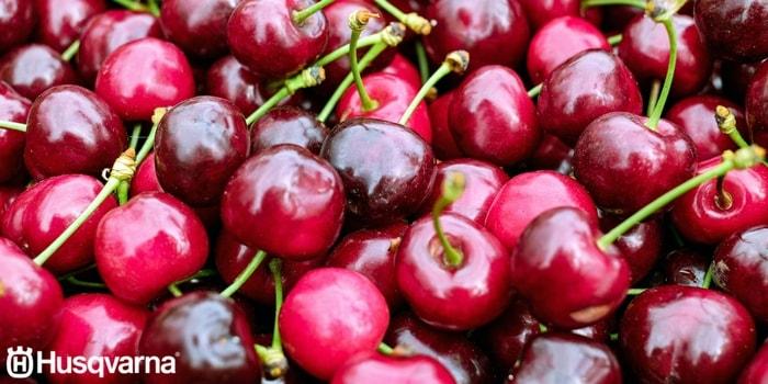 frutas época otoño chile