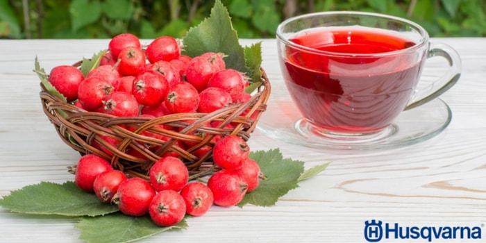 infusión-frutos-espino-blanco