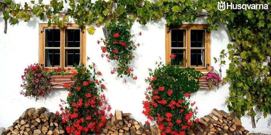 Decora tu jardín con las mejores plantas trepadoras