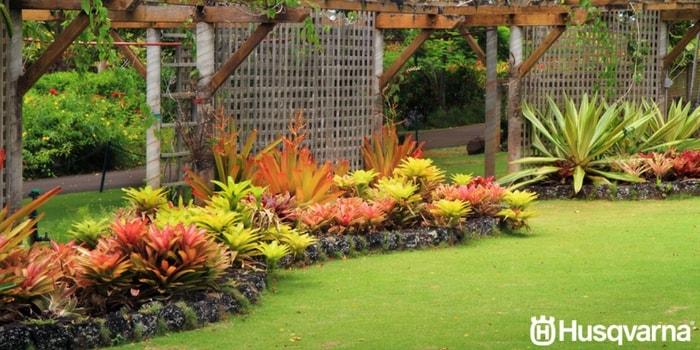 vegetación-de-jardín