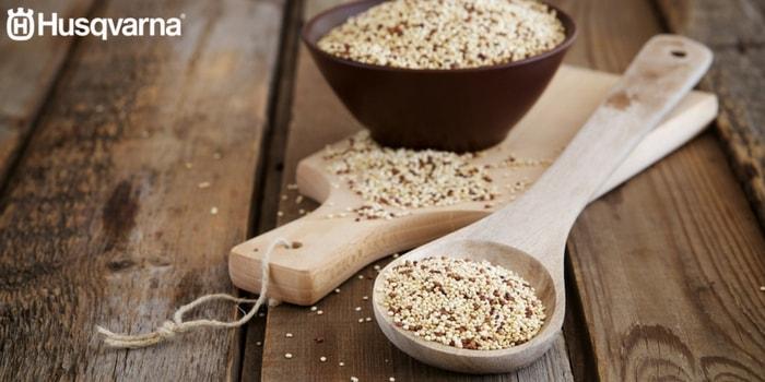 propiedades-quinoa-salud