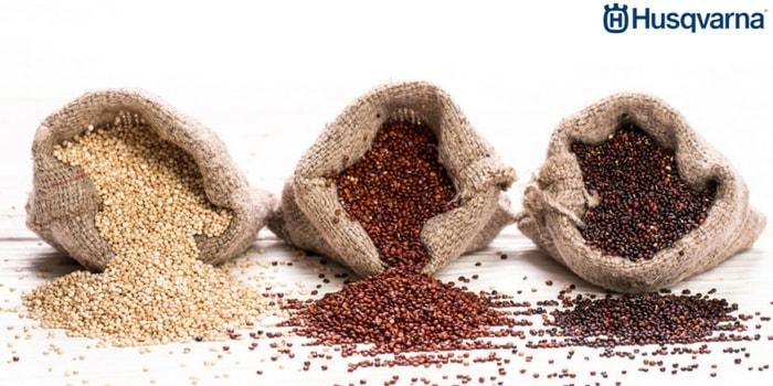 variedades-quinoa