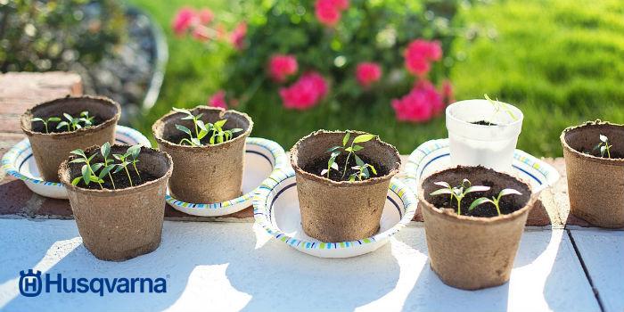 plantas-en-macetas