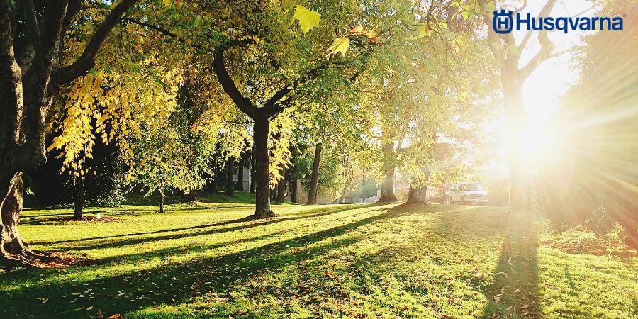 Acer negundo, uno de los árboles con más capacidad de adaptación
