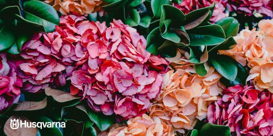 Plantas De Sombra Las Especies Perfectas Para Los Jardines Con Poca - Plantas-exterior-sombra