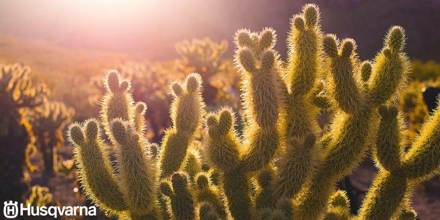 Todo sobre los cactus: características y variedades más comunes