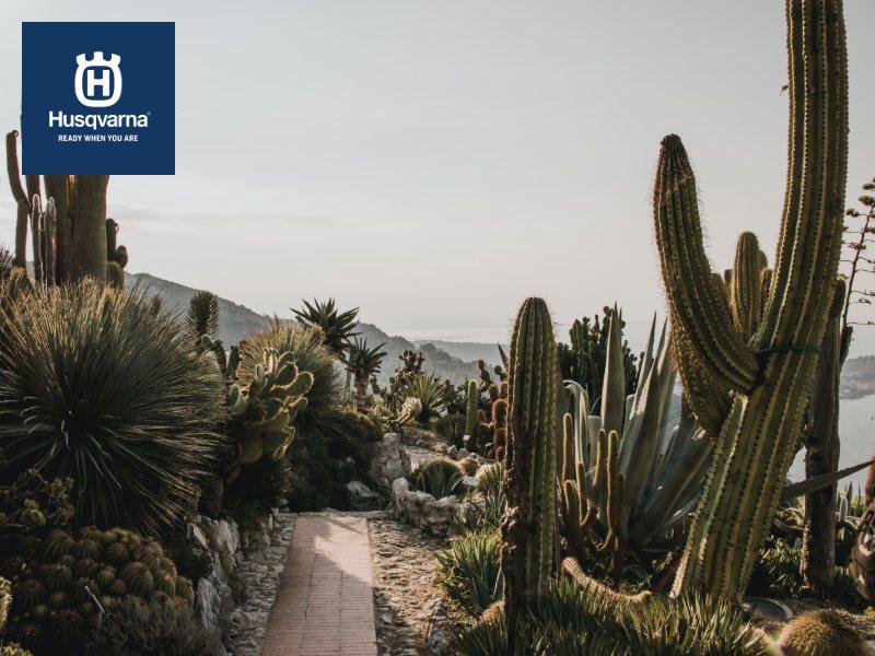 Todo sobre los cactus, las plantas de moda en decoración