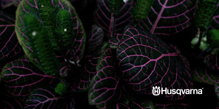 Plantas De Sombra Las Especies Perfectas Para Los Jardines Con Poca - Flores-de-sombra