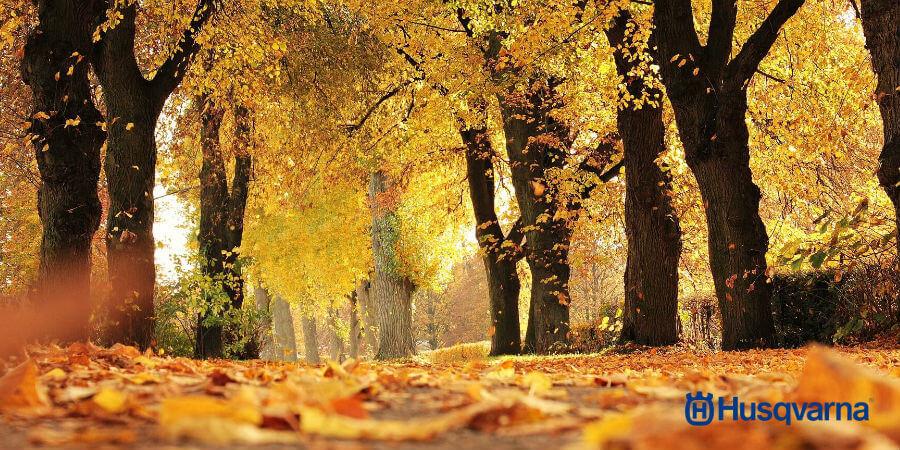 Liquidambar árboles Vistosos Para Tu Jardín De Otoño