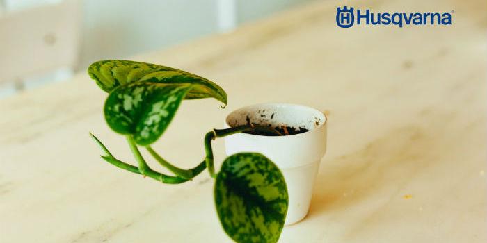Plantas Colgantes Perfectas Para La Decoracion Interior Y Exterior - Plantas-colgantes-de-interior