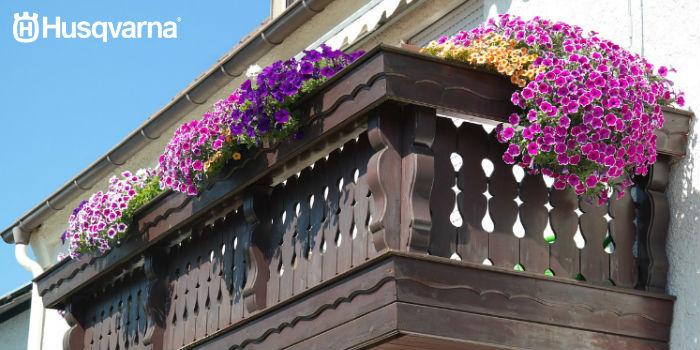 petunias-balcón