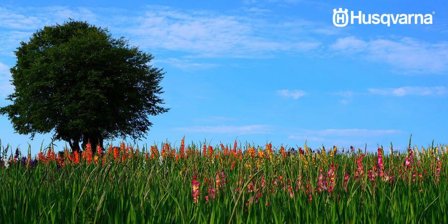 El gladiolo llenará de color tu jardín