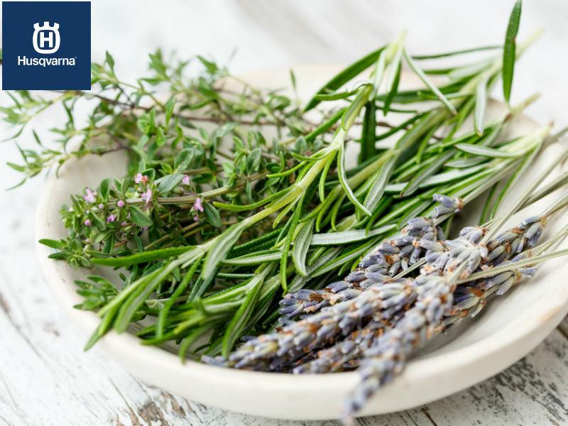 Descubre las cuatro plantas aromáticas más populares