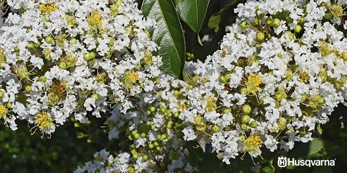 arbustos-con-flores