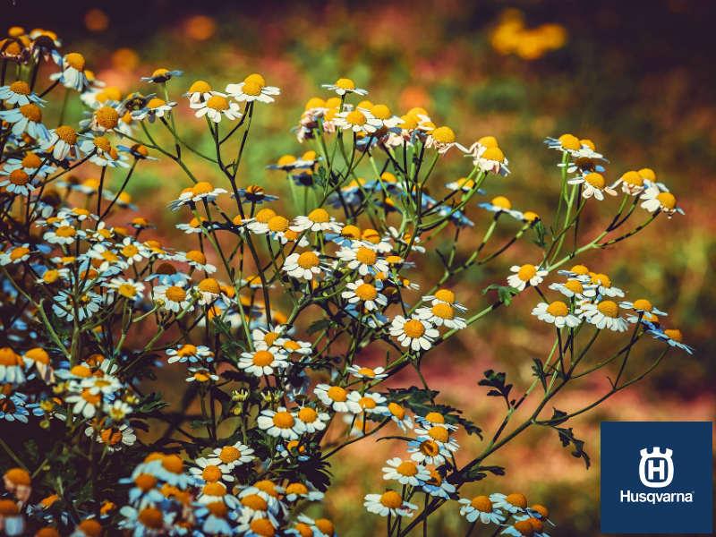Cinco arbustos con flores para decorar tu jardín