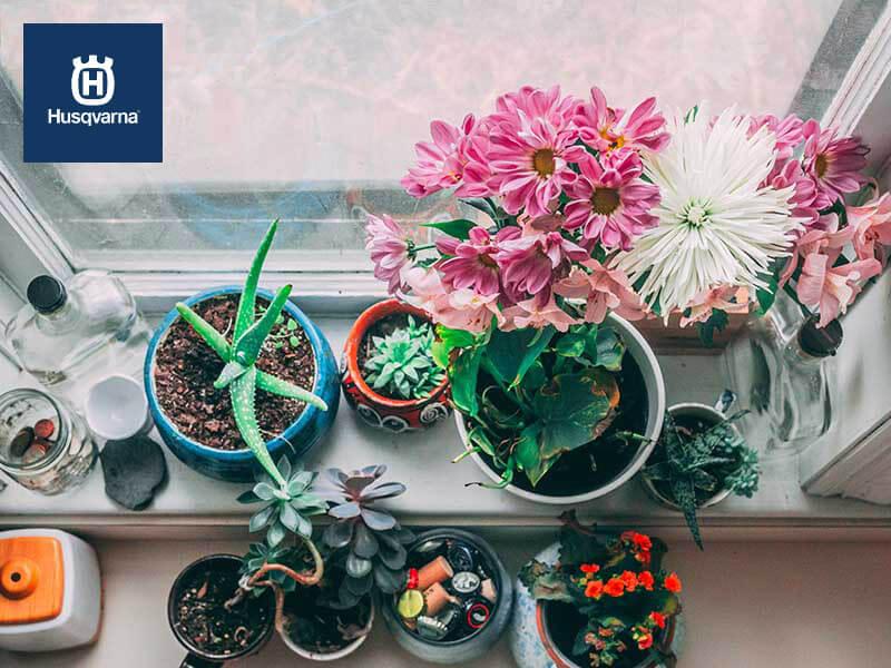 Cinco plantas de interior con flor para decorar tu casa